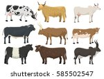set of bulls and cows farm... | Shutterstock .eps vector #585502547