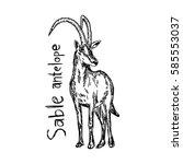 sable antelope   vector... | Shutterstock .eps vector #585553037