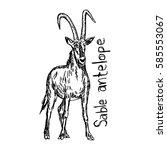 sable antelope standing  ... | Shutterstock .eps vector #585553067