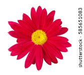 Red Flower Daisy Head On A...