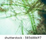 Small photo of Filamentous algae are single algae cells that form long visible chains, threads, or filaments.