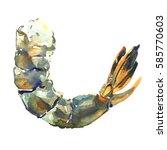 raw fresh tiger shrimp  prawn ... | Shutterstock . vector #585770603