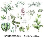 Stock photo big set elements herbs leaf berry collection garden and wild herb leaves branches 585778367