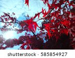Red Leaves On A Blue Sky.