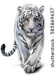 white tiger sneaks watercolor... | Shutterstock . vector #585869657