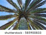 underside of palm tree with... | Shutterstock . vector #585900833