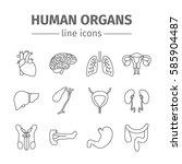human organs. internal organs.... | Shutterstock . vector #585904487