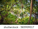 palm leaves.tropical forest on... | Shutterstock . vector #585909017