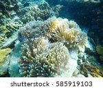 Sea Anemones In The Sea