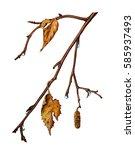watercolor painting birch... | Shutterstock . vector #585937493