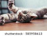 Beautiful Gray Cat Lying On Th...