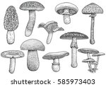 set of mushroom illustration ... | Shutterstock .eps vector #585973403