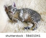 Stock photo lying kitten 58601041