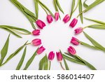 Pink Tulips Isolated On White....
