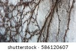 on the wall | Shutterstock . vector #586120607