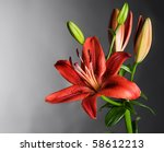 Beautiful Red Lily Flower Over...