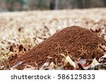 Large Ant Hill In A Field Of...