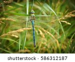 Blue Dragonfly Sits On The...