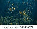 Trees On Mountainside In The...