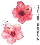 bud of exotic red flower.... | Shutterstock . vector #586379123