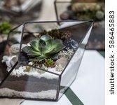 various succulents in the...   Shutterstock . vector #586465883