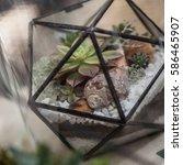 various succulents in the...   Shutterstock . vector #586465907
