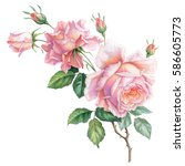 Stock photo pink white vintage roses flowers isolated on white background colored pencil watercolor 586605773