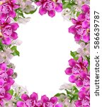 bright and colorful flowers of... | Shutterstock . vector #586639787