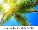 Palm Tree And Sun.