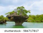 Zanzibar Rough Coastline...