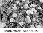 daisies background  in black...   Shutterstock . vector #586771727