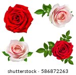 Stock photo rose isolated on the white background 586872263