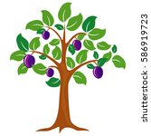 Plum Tree Vector Illustration....