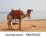Camel On The Beach Of Sharm El...