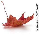 Colorful Autumn Maple Leaf...