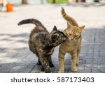 Small photo of Two cats kissing