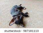 sick black cat sleep on  floor... | Shutterstock . vector #587181113