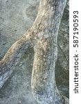 bark tree | Shutterstock . vector #587190593