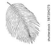 palm leaf hand drawn... | Shutterstock .eps vector #587204273