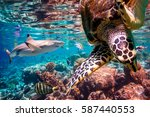 reef with a variety of hard and ... | Shutterstock . vector #587440553
