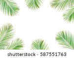 tropical exotic palm branches... | Shutterstock . vector #587551763