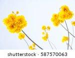 Yellow Cotton Flowers  Silk...
