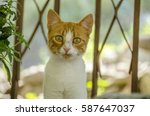 Stock photo cute kitten 587647037