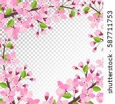 cherry blossom background. pink ... | Shutterstock .eps vector #587711753