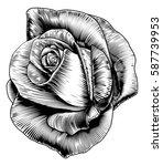 a single rose flower in a... | Shutterstock . vector #587739953