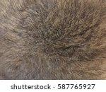 Scottish Cat Fur Texture