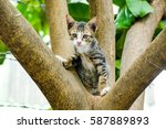 Stock photo stray kitten climbing trees playing happily and are staring at a photograph 587889893
