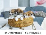 Four Charming Puppies In A...