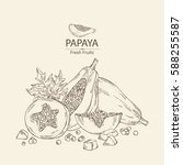 background with papaya and... | Shutterstock .eps vector #588255587