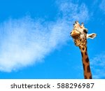 giraffe frontal portrait... | Shutterstock . vector #588296987